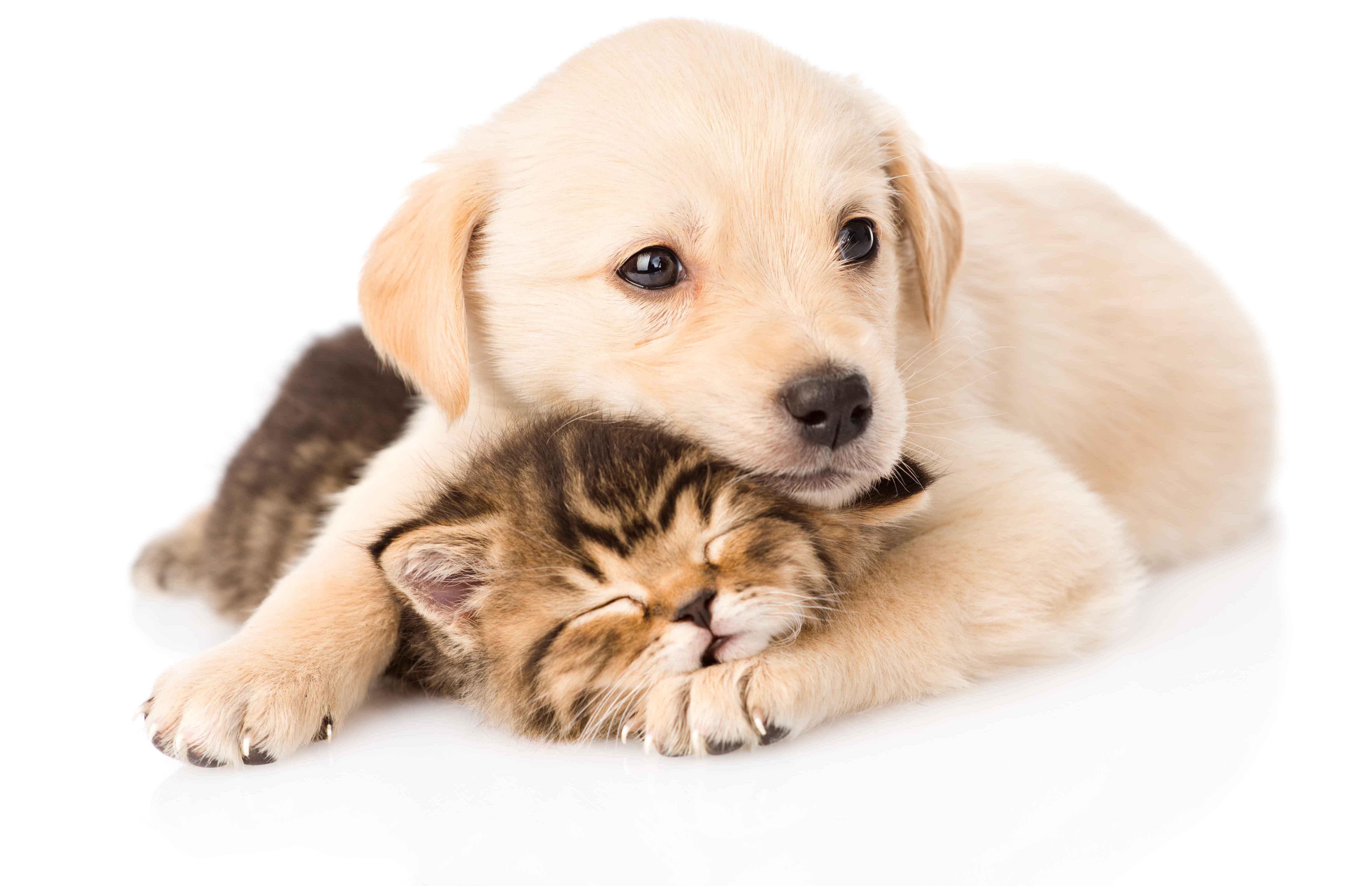 Puppy_kitten