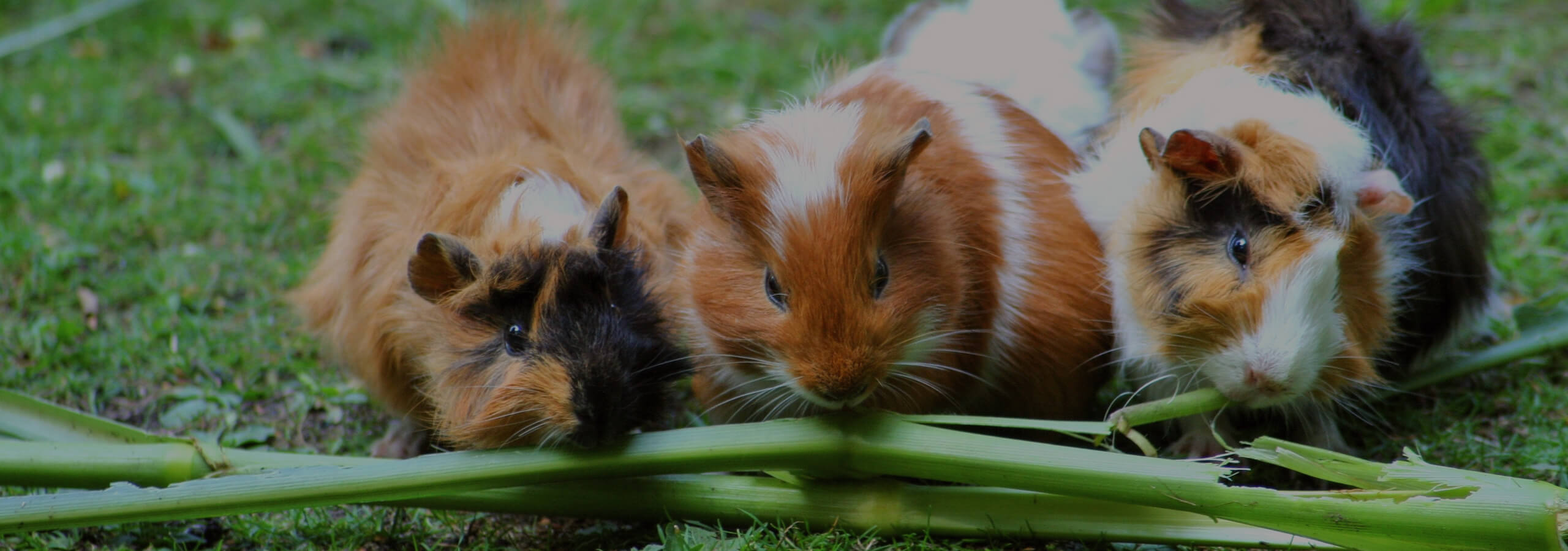 Obesity in Pets and how to manage it
